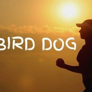 CARDIO EXERCISE 17: Bird Dog