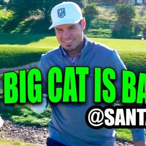 THE RETURN OF THE BIG CAT!